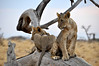 Samburu Game Reserve0001_59