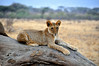 Samburu Game Reserve0001_83