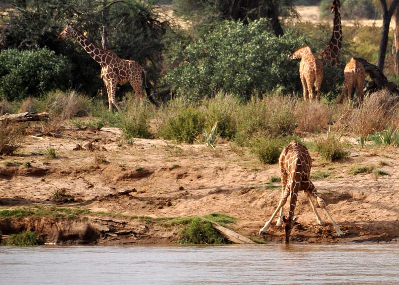 Samburu Game Reserve0001_18