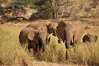 Samburu Game Reserve0001_33