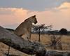 Samburu Game Reserve0001_73
