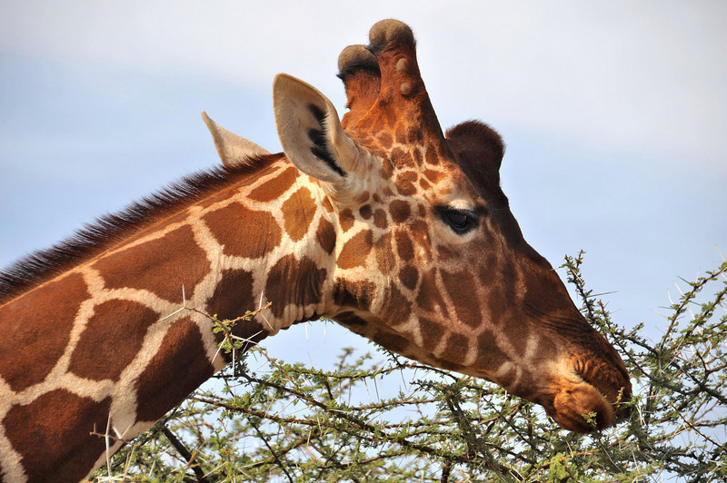Samburu Game Reserve0001_221