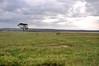 Lake Nakuru0001_83