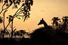 Samburu Game Reserve0001_261