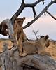 Samburu Game Reserve0001_72