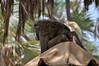 Samburu Game Reserve0001_249