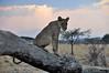 Samburu Game Reserve0001_70