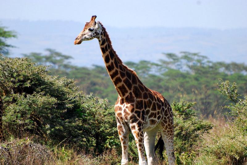 Lake Nakuru0001_101