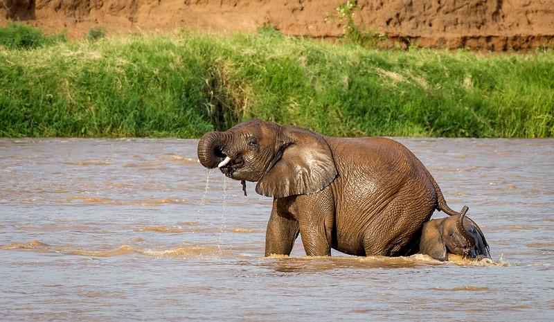 Samburu National Reserve, Kenya.