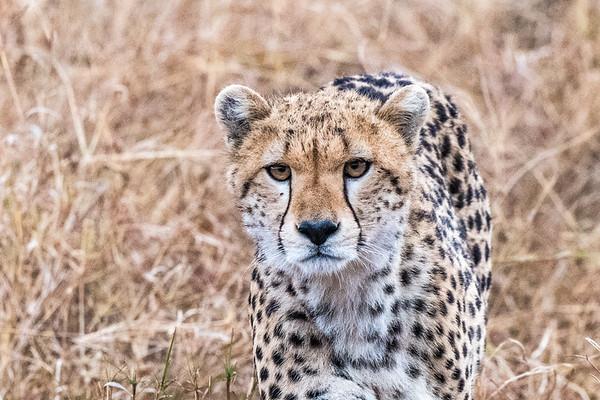 Kenya 2016