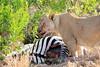 Lion_Cubs_Mara_North_Elewana__0812