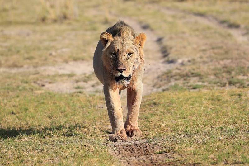 Lion_Cubs_Amboseli_Elewana__0062