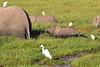 Elephant_Amboseli_Elewana__0242