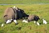 Elephant_Amboseli_Elewana__0243