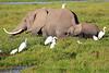Elephant_Amboseli_Elewana__0270