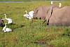 Elephant_Amboseli_Elewana__0258