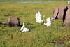 Elephant_Amboseli_Elewana__0254