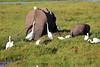 Elephant_Amboseli_Elewana__0245