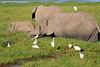 Elephant_Amboseli_Elewana__0265