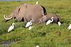 Elephant_Amboseli_Elewana__0268
