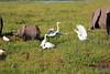 Elephant_Amboseli_Elewana__0253
