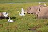 Elephant_Amboseli_Elewana__0259