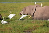 Elephant_Amboseli_Elewana__0257