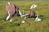 Elephant_Amboseli_Elewana__0250