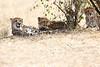 Cheetah_Mara_Reserve_Asilia__0041