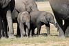 Elephants_Amboseli_Elewana__0024