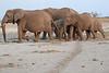 Elephants_Amboseli_Elewana__0046