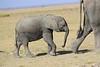 Elephants_Amboseli_Elewana__0036