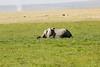 Elephant_Amboseli_Elewana__0279