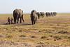 Elephants_Amboseli_Elewana__0032