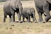 Elephants_Amboseli_Elewana__0019