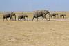 Elephants_Amboseli_Elewana__0039