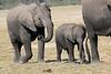 Elephants_Amboseli_Elewana__0016