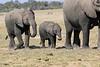 Elephants_Amboseli_Elewana__0015