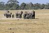 Elephants_Amboseli_Elewana__0006