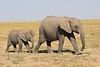Elephants_Amboseli_Elewana__0030