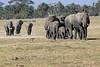 Elephants_Amboseli_Elewana__0008