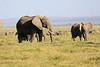 Elephant_Amboseli_Elewana__0165