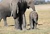 Elephants_Amboseli_Elewana__0025
