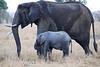 Elephants_Mara_North_Elewana__0034