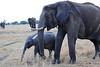 Elephants_Mara_North_Elewana__0036