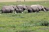 Elephant_Amboseli_Elewana__0044