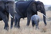 Elephants_Mara_North_Elewana__0026