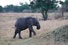 Elephants_Mara_North_Elewana__0033