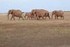 Elephants_Amboseli_Elewana__0044