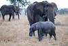 Elephants_Mara_North_Elewana__0030